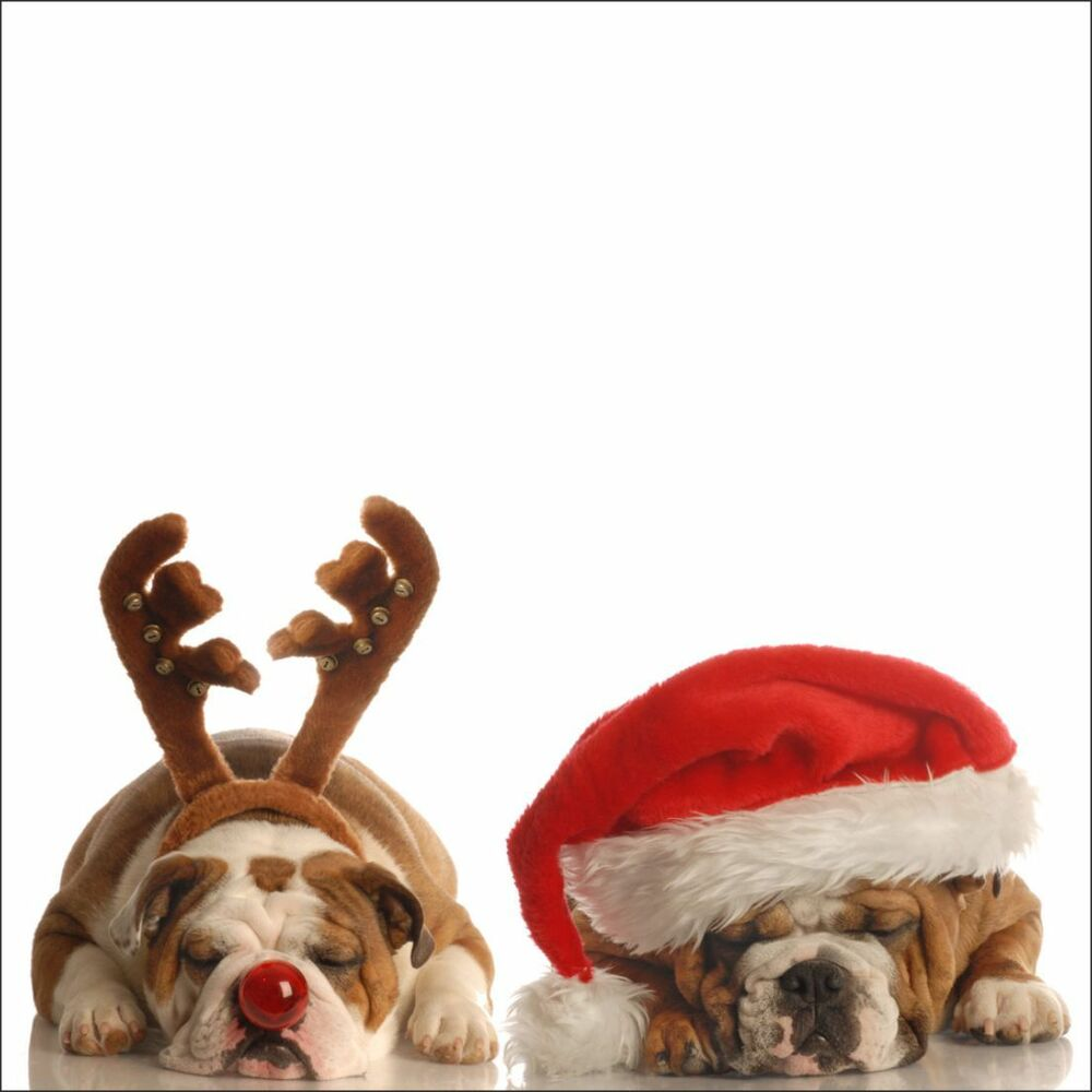 Details About New Bulldogs Christmas Card Mum Dad Birthday Cards Dogs Design Bulldog Puppy