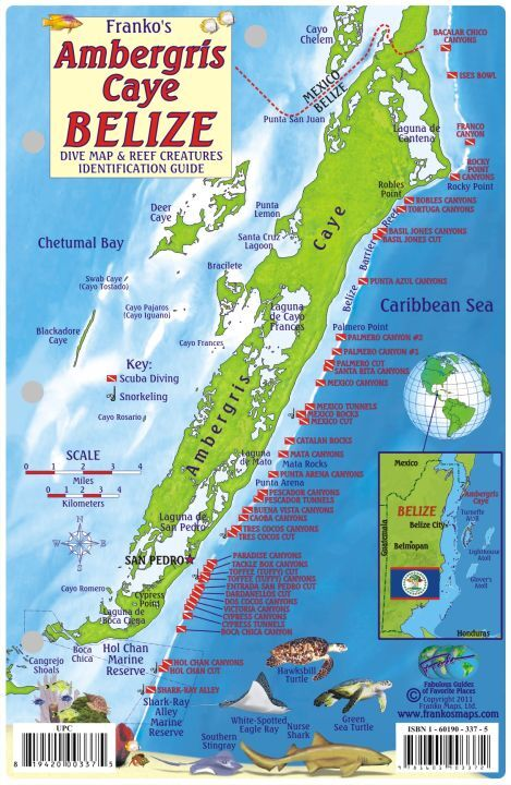 Ambergris caye belize dive map reef creatures laminated - Dive shop mexico ...