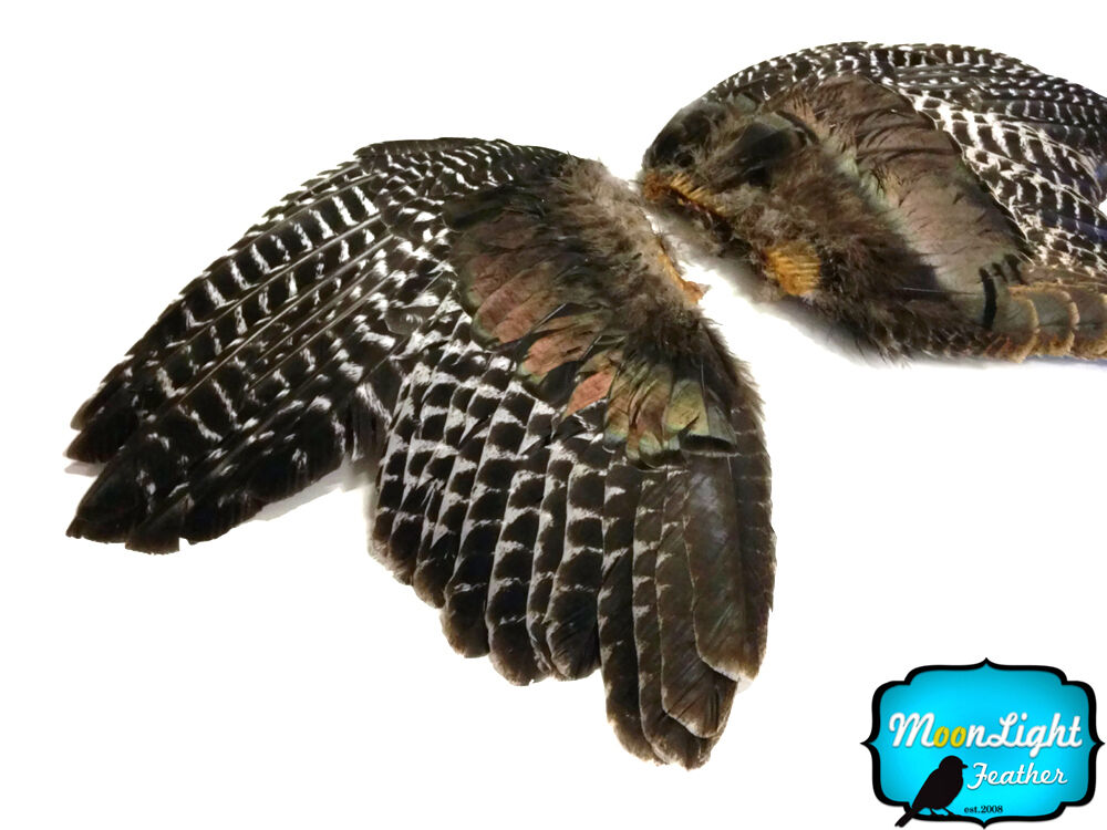 1 pair natural barred wild turkey complete large wing for Natural feathers for crafts