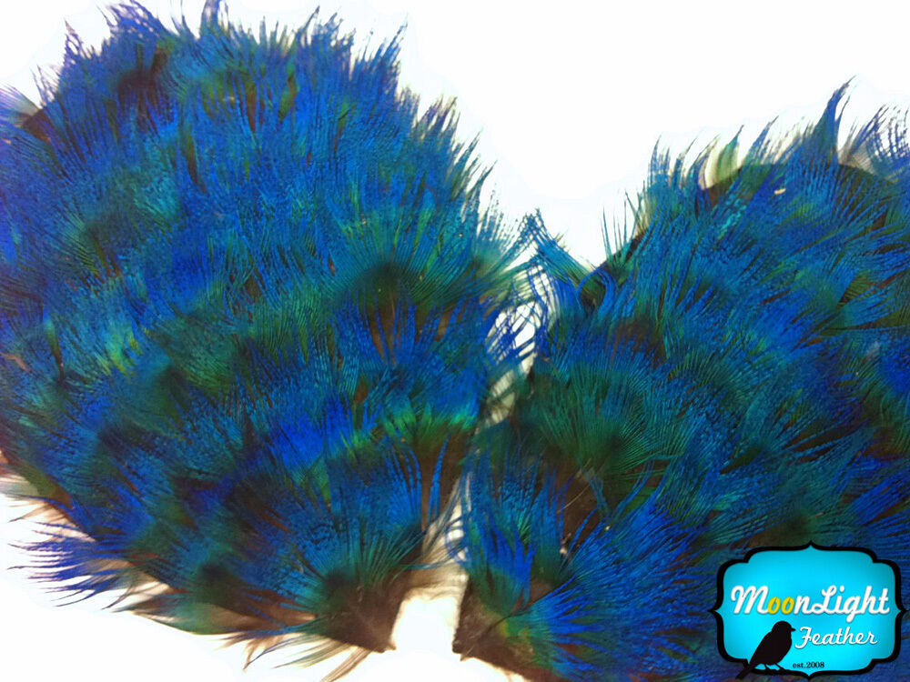 1 Piece - Iridescent Blue Peacock Plumage Feather Pad | eBay