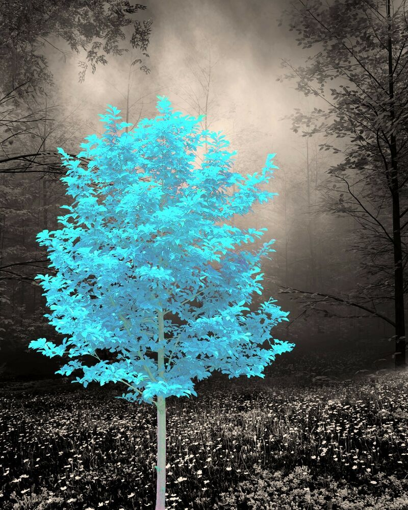 Teal Brown Home Decor Wall Art Tree Photo Print Bedroom