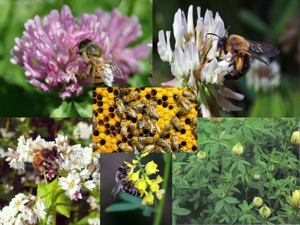 free flower seeds for bees