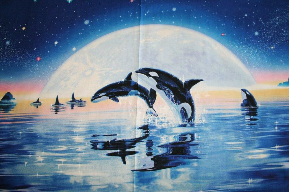 Children of the sea moon killer whale fabric whale for Children of the sea fabric