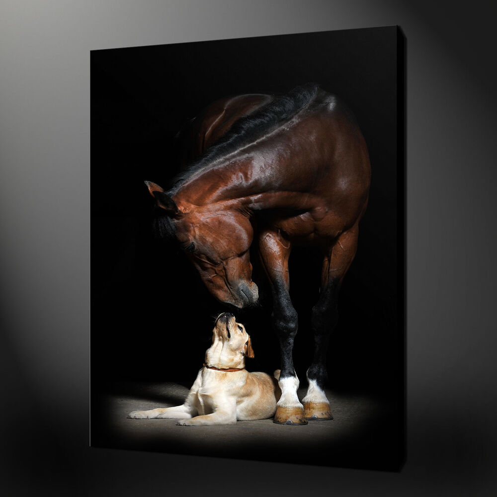 Not Framed 12x18 39 39 Home Decor Canvas Prints Wall Pictures Art Animal Dog Horse Ebay