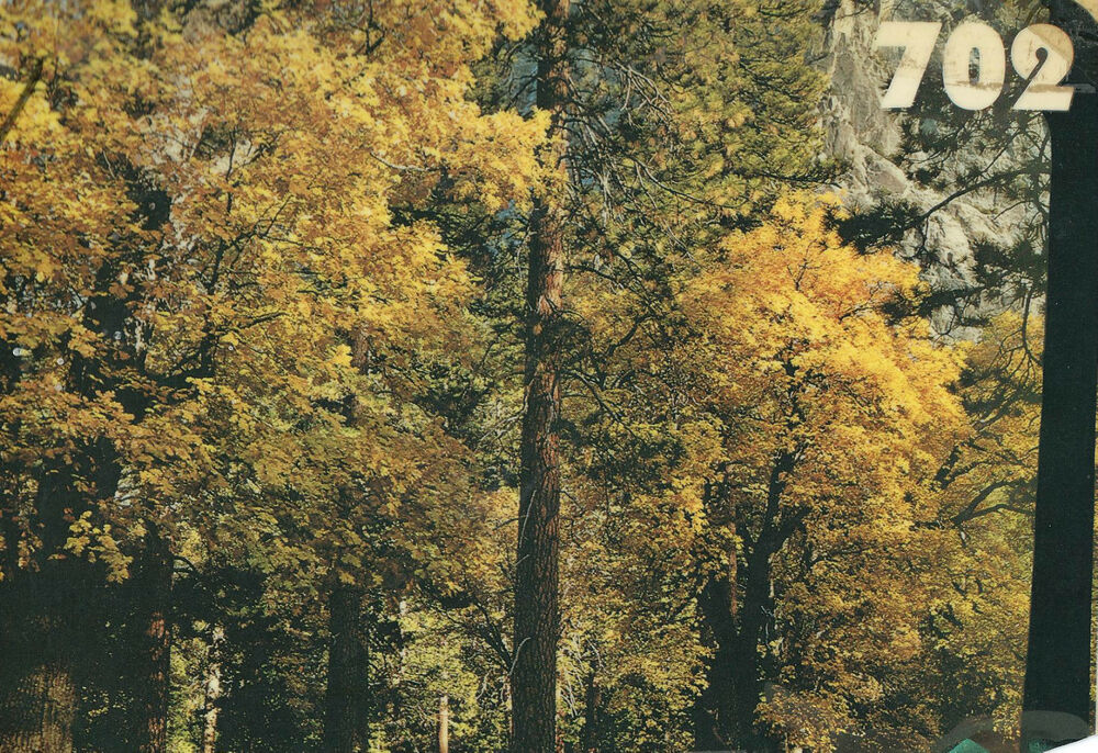 Scenic wall mural autumn trees ebay for Autumn tree mural
