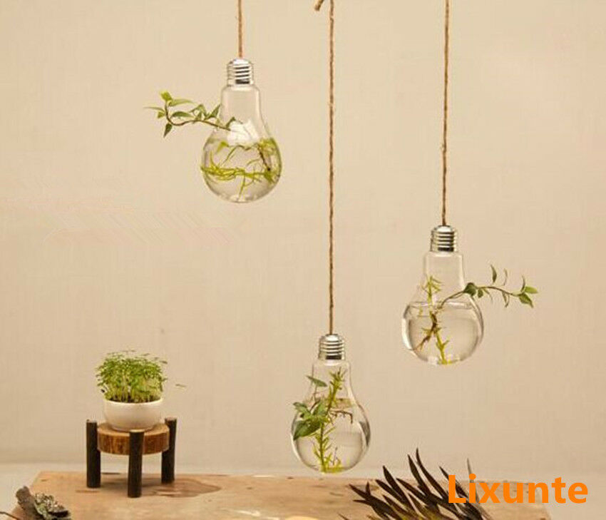 Hanging Plant Wall Decor : Wall hanging light bulb glass vase flower plant terrarium