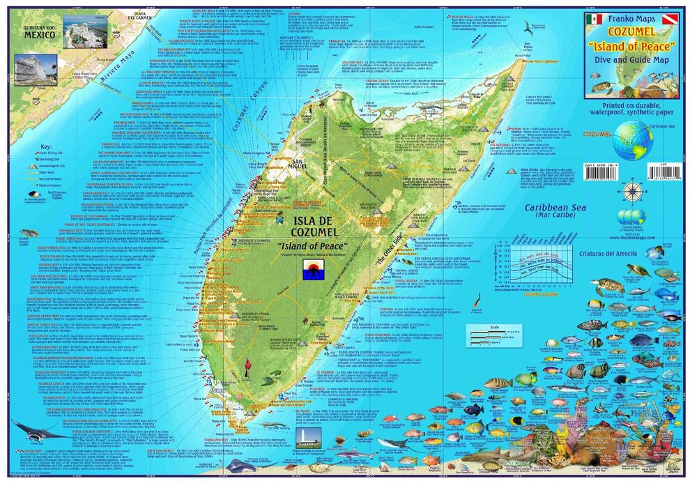 Cozumel mexico dive snorkel adventure guide map poster by - Dive shop mexico ...