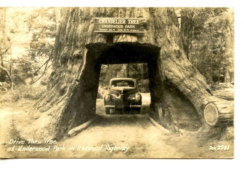 Chandelier Tree-Car-Redwood Highway-California-RPPC-Vintage Real ...