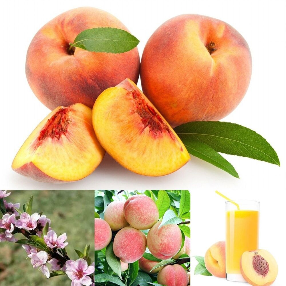 10 Peach Seeds - Prunus persica Dwarf Peach Tree Fruit ...