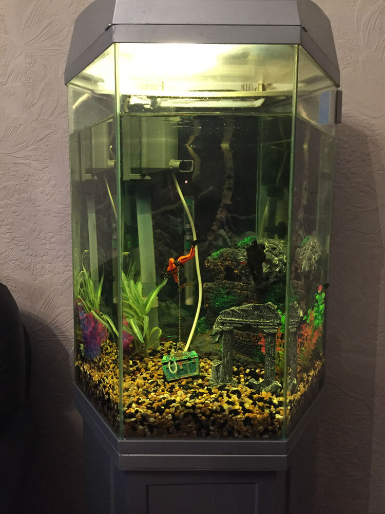 Large hexagon fish tank and stand full set up collection for Hexagon fish tank with stand