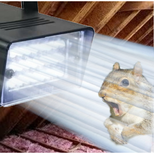 Attic Squirrel Repellent! FLASHING STROBE LIGHT. A Squirrels Worst Nightmare!