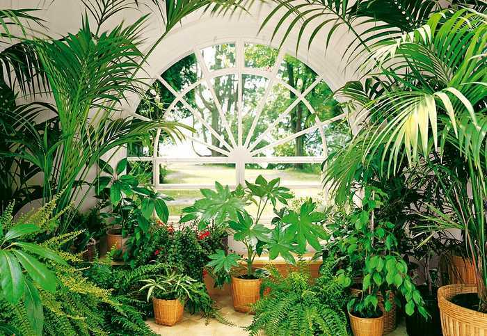 fototapete wintergarten 366x254 gr ne palmen weisse fenster conservatory garten ebay. Black Bedroom Furniture Sets. Home Design Ideas