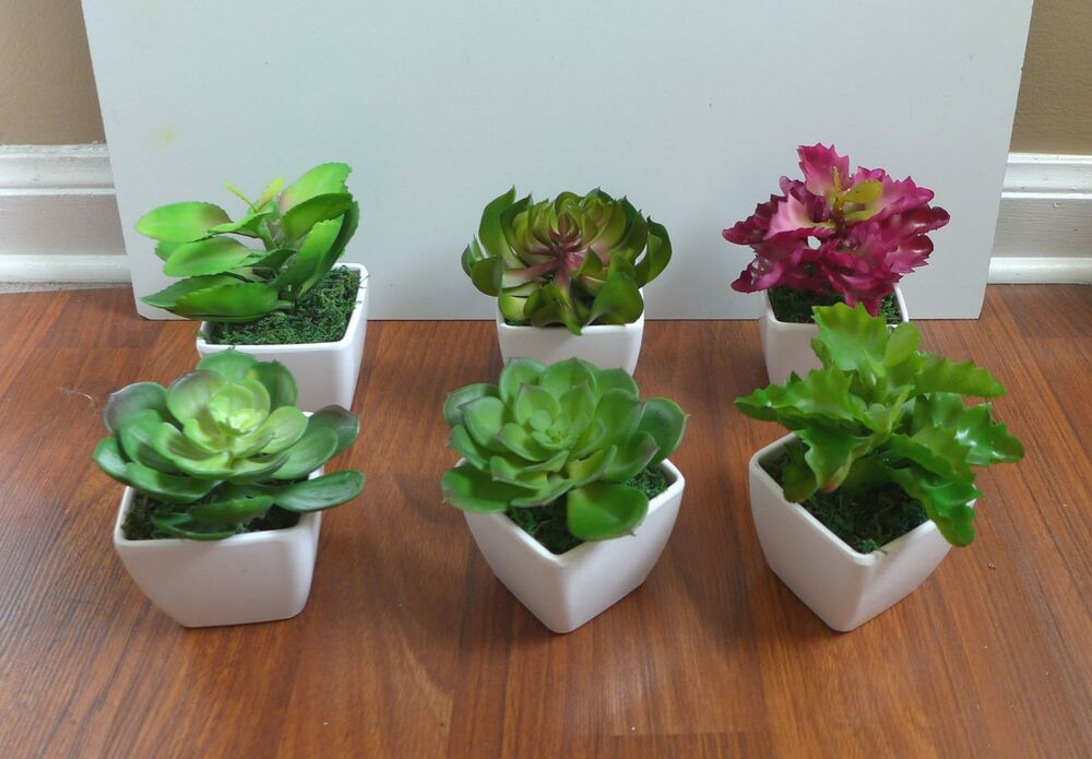 Mini Potted Artificial Unkillable Succulents Plants With