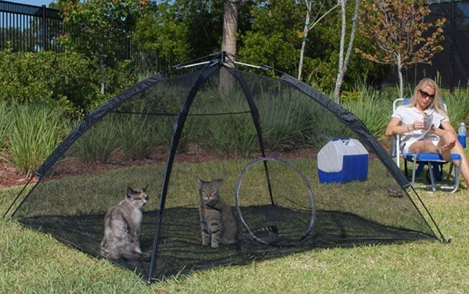 Portable Outdoor Dog Enclosures : Outdoor cat enclosure best pet folding playpen kitty puppy