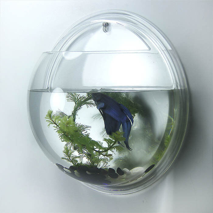 Home decoration pot wall hanging mount bubble aquarium for Wall hanging fish tank