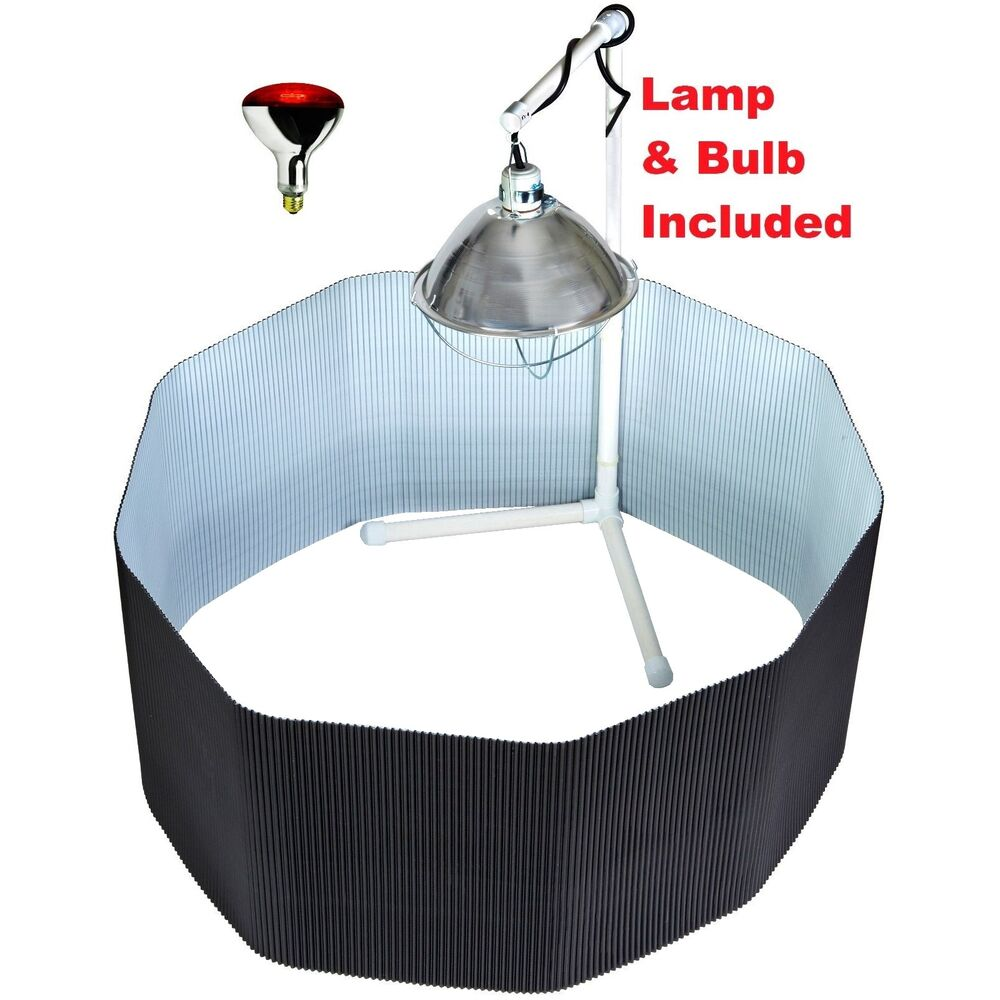 Deluxe Chick Brooder Kit Poly Corral Pen Amp Bulb Amp Lamp Amp Stand For Baby Chickens Ebay