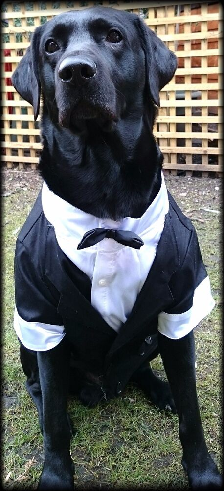Large Breed Big Dog Tuxedo with Bow Tie Size Formal Suit