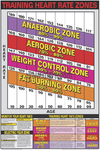 Cardiovascular Fitness Training Heart Rate Zones Professional Wall