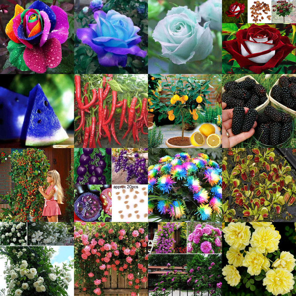 Wholesale mixed flowers vegetable fruit seeds home garden for Flower garden decorations
