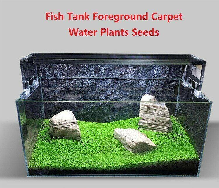 10g mini aquarium foreground carpet grass plant seeds tank. Black Bedroom Furniture Sets. Home Design Ideas