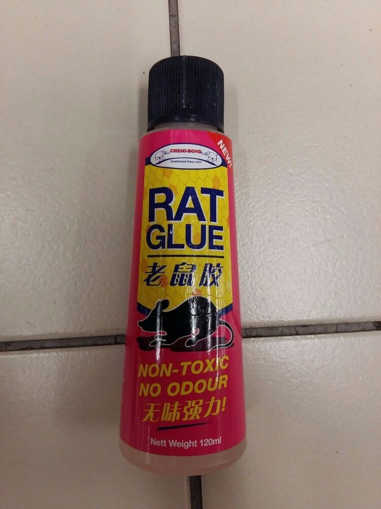 how to kill a mouse on a glue trap