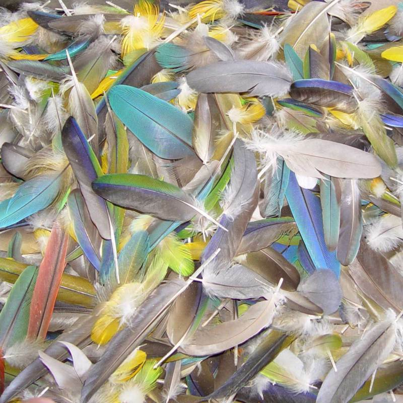 20 parrot feathers bird craft macaw wing tail mix blue for Where can i buy feathers for crafts