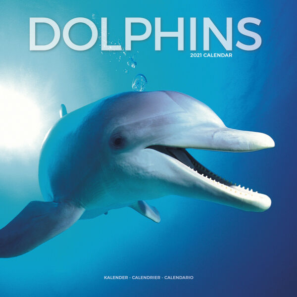 Royaume-UniDauphins 2021 Calendrier 15% OFF Multi s