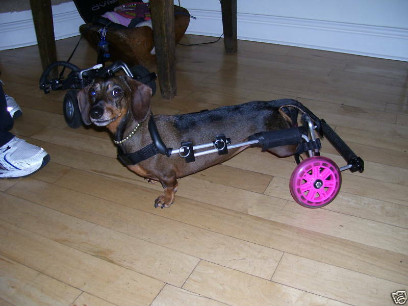 Wheels for Dogs Dog Wheelchairs UK made