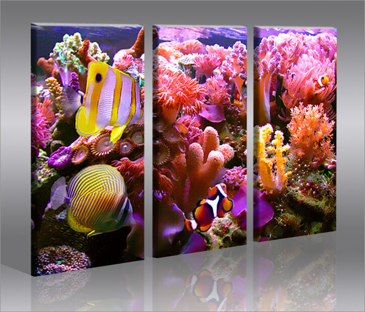fische 3 bilder bild aquarium auf leinwand wandbild poster ebay. Black Bedroom Furniture Sets. Home Design Ideas