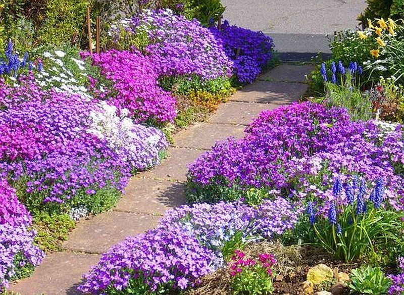 mixed alpine seeds, rockery perennial, ground cover, alpines, Natural flower