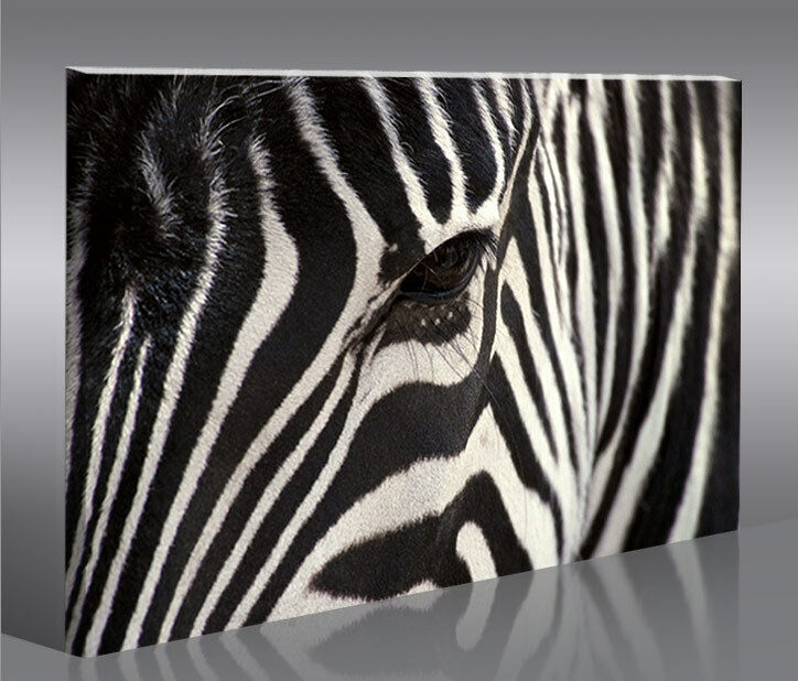 zebra v2 100 bild auf leinwand wandbild poster kunstdruck ebay. Black Bedroom Furniture Sets. Home Design Ideas