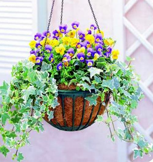 Decorative Hanging Flower Baskets : Decorative hanging flower garden patio planter basket with