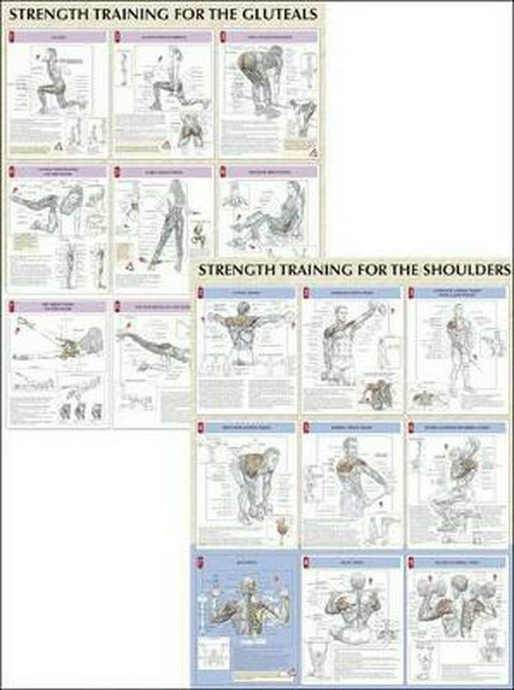 Strength Training Anatomy Poster Series by Frederic Delavier ...