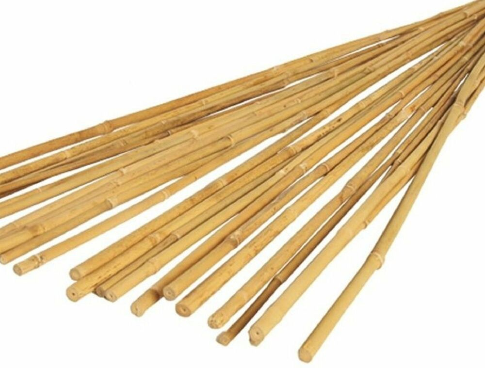 3ft X Strong Bamboo Garden Plant Support Canes Thick Heavy Duty 4ft 5ft 6ft 10ft Ebay