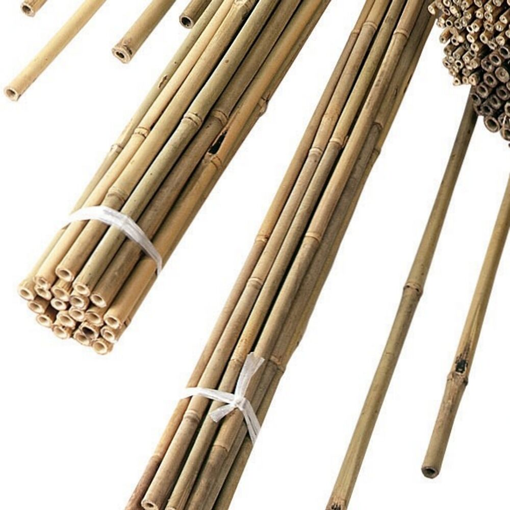 how to cut bamboo canes