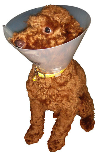 Veterinary Medical Elizabethan Cone Collar For Dogs 7 5