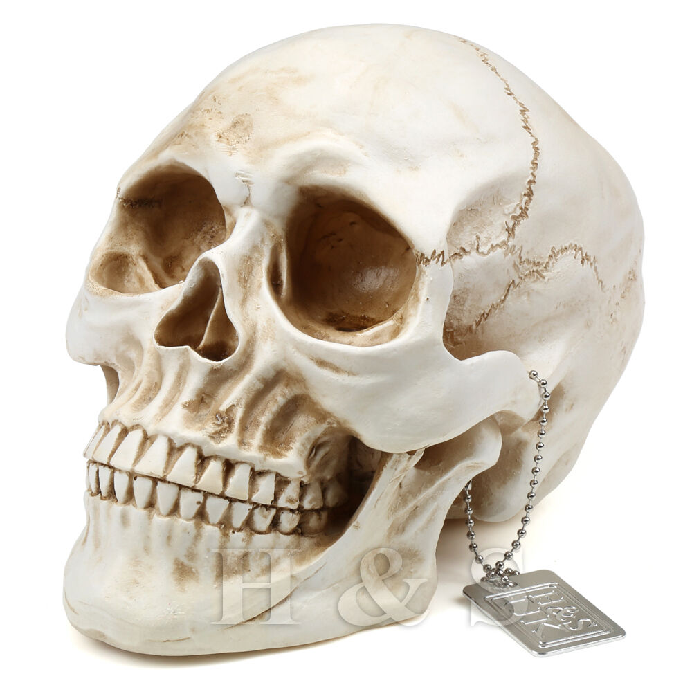 Halloween skull decorations - Life Size Replica Realistic Human Skull Gothic Halloween Decoration Ornament