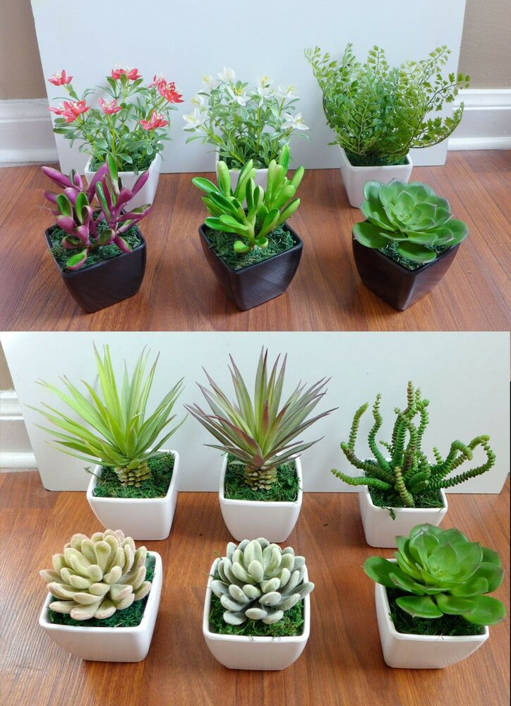 3 mini potted artificial flowers unkillable succulents. Black Bedroom Furniture Sets. Home Design Ideas