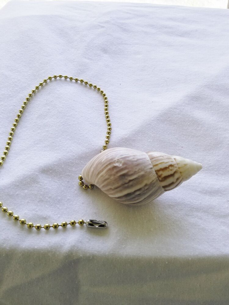 Lamp Pull Chain Or Ceiling Or Fan With Florida Shell Ebay