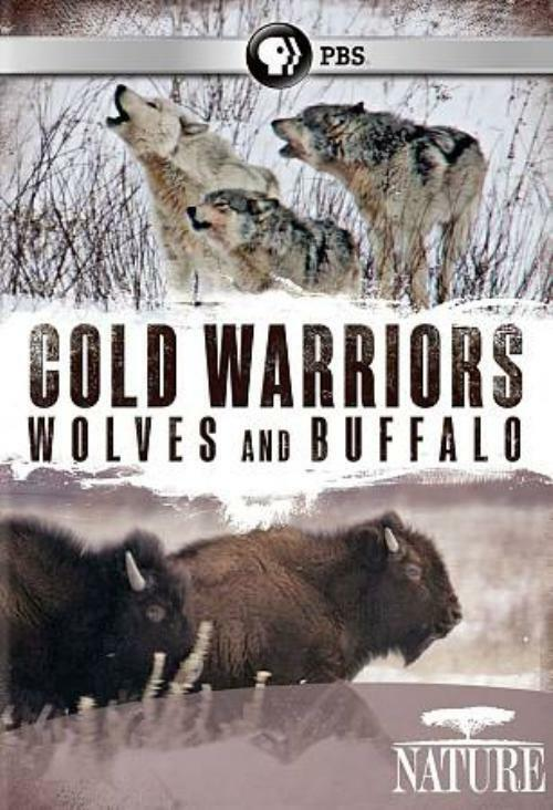 Details about   NATURE: COLD WARRIORS - WOLVES AND BUFFALO NEW DVD