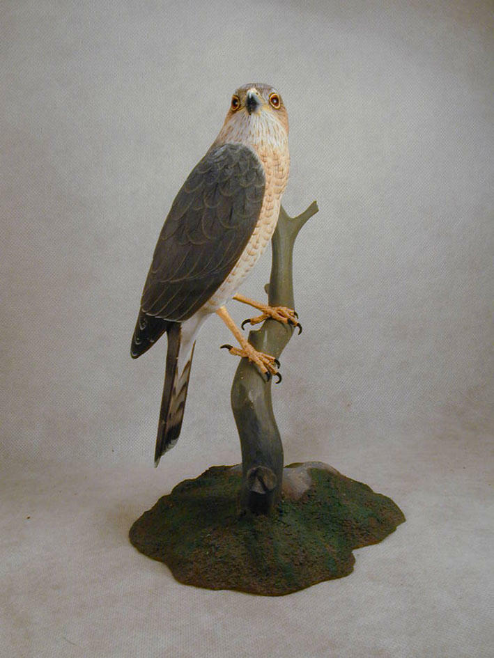 sharp shinned hawk original wood carving ebay. Black Bedroom Furniture Sets. Home Design Ideas