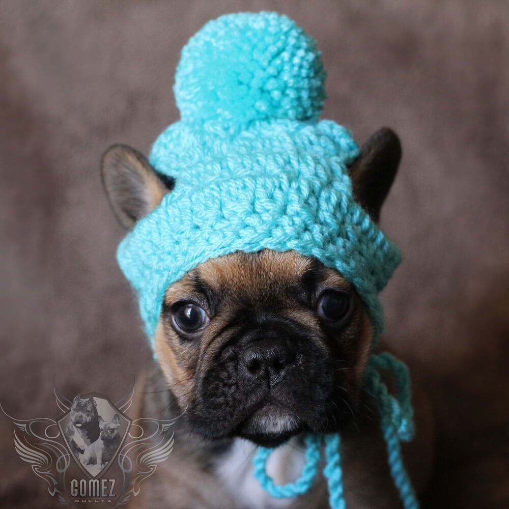 Handmade Crochet Small Dog Breed Puppy French Bulldog Knit ...