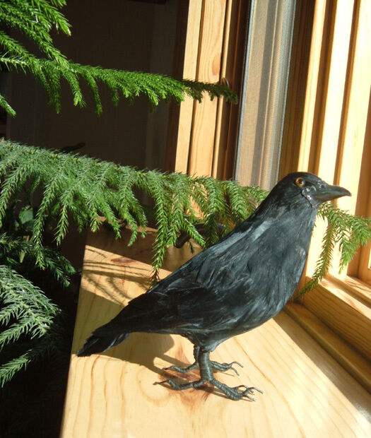 Crow Bird Prop : Black crow realistic bird halloween prop furry animal