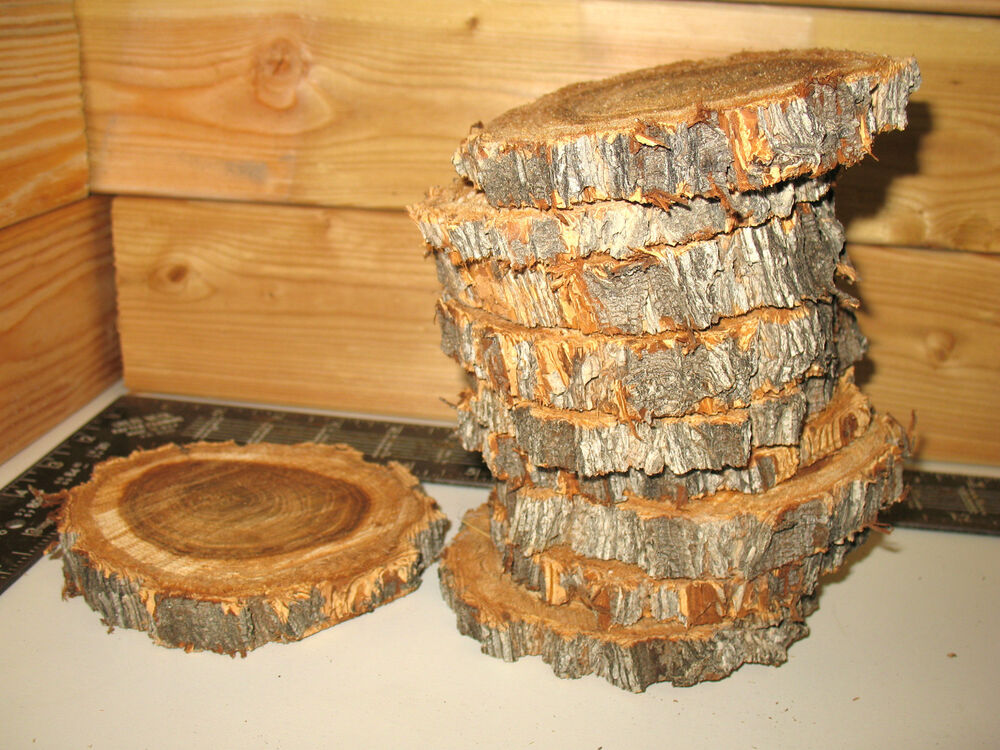 Pc quot to elm log slices wood disk rustic wedding