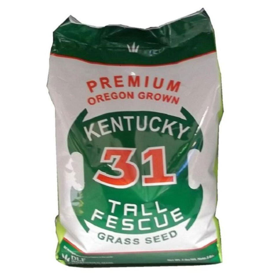 fast growing grass seed 5 lb kentucky 31 fescue grass seed lawn drought 28825