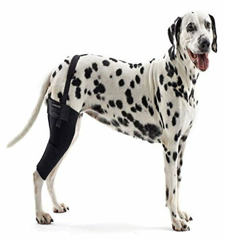 Cruciate Brace For Dogs Uk