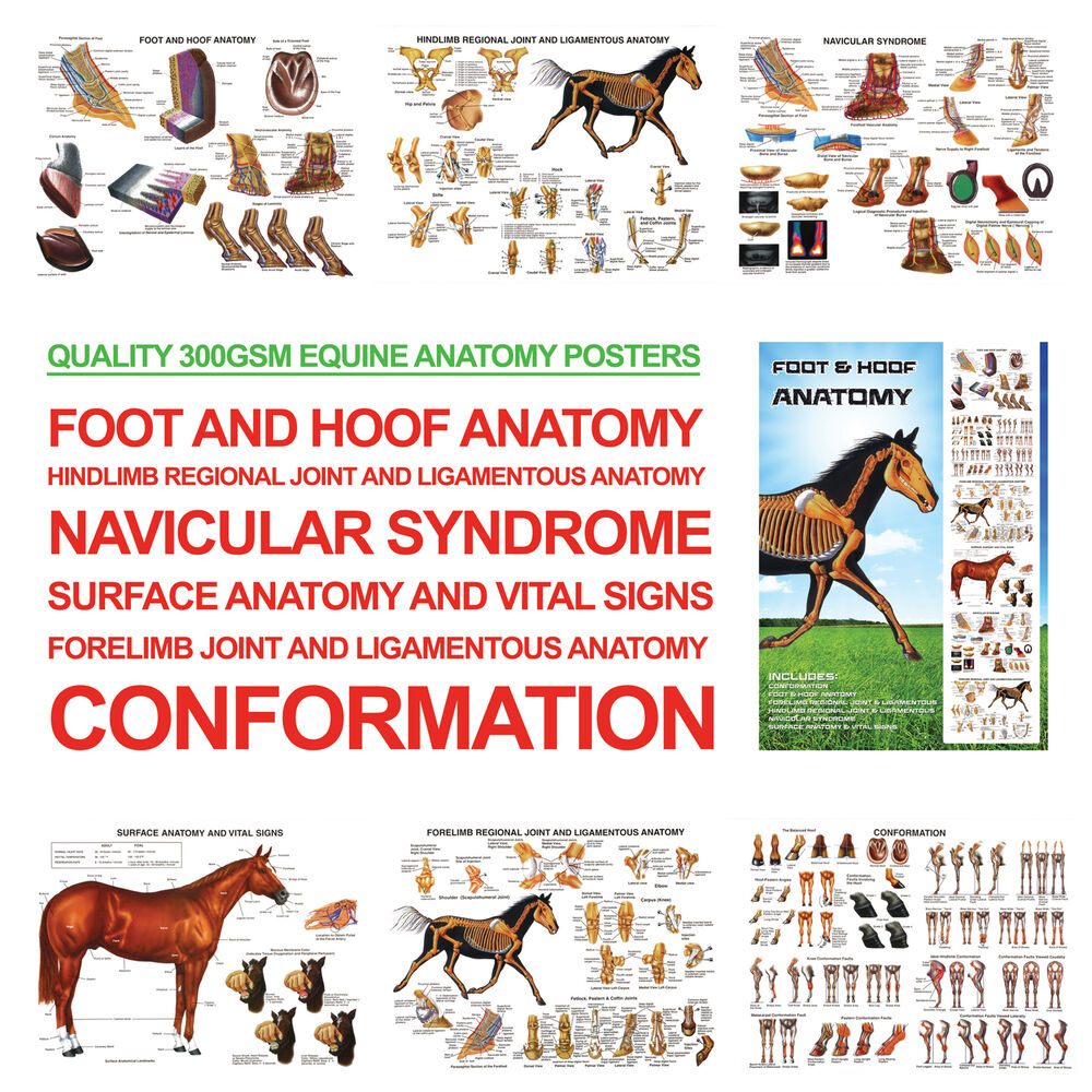 Foot and Hoof Horse Anatomy A3 Posters for Farriers, Farriery, Vets ...