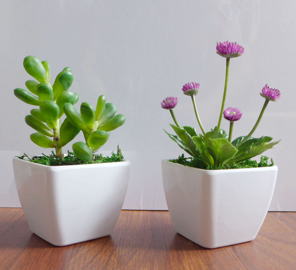 Two potted artificial succulents yacon small flower plants for Plant decorations home