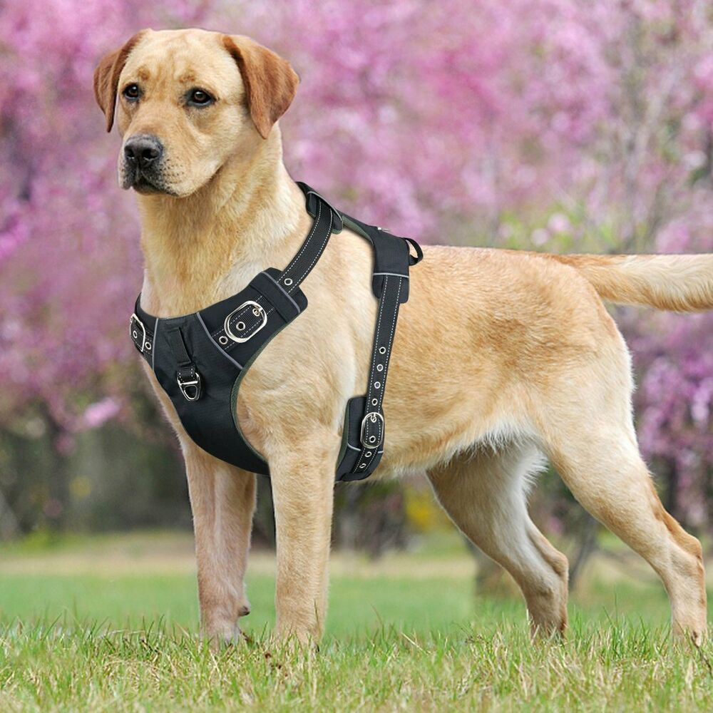 dog harness    dog harness    with handle for medium    dogs    tactical k9     dog harness    with handle for medium    dogs    tactical k9