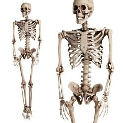 Kyпить 5.6ft Halloween Poseable Human Skeleton Full Life Size Props Party Decoration на еВаy.соm